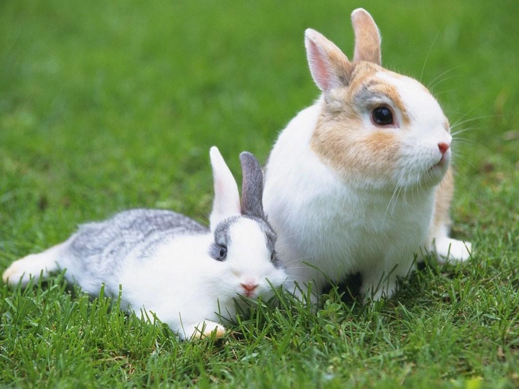 【萌宠】有朋友养过小兔子吗?来一起交流心得经验吧!