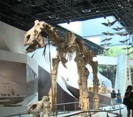 栩栩如生的动物,好玩的VR!武汉自然博物馆开馆啦!