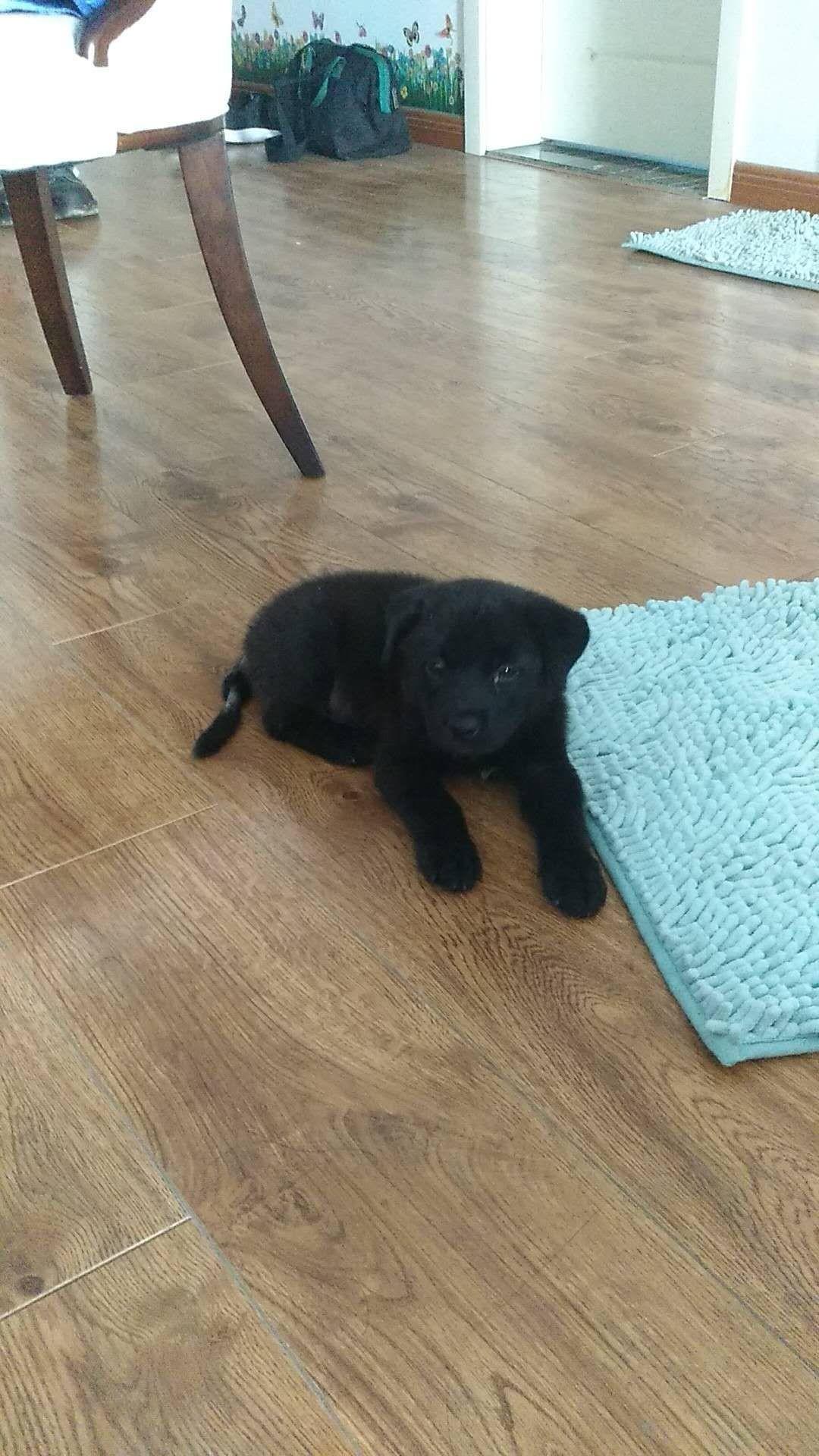 捡到一只小黑狗,没时间养!求好心人领养!
