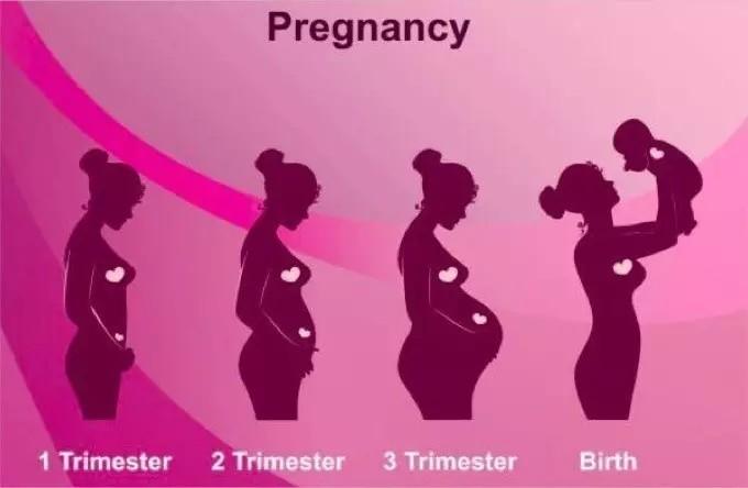 孕早期你应该知道的一切!看这一篇就够!值得收藏!