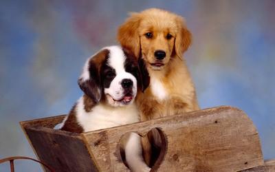 求问各位,狗狗快一岁了,想做绝育!哪里做绝育的性价比高啊?