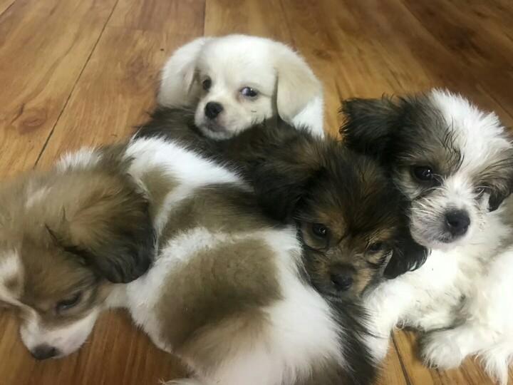 免费领养!一群可爱的小奶狗找主人啦!