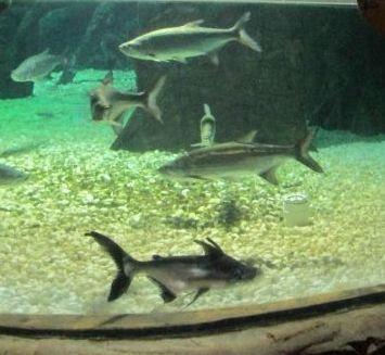 十一打卡东湖海洋乐园,娱乐教育两不误,带娃游玩好去处!