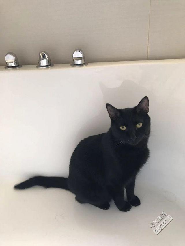 11个月大黑猫已绝育,免费求领养,仅限武昌区!