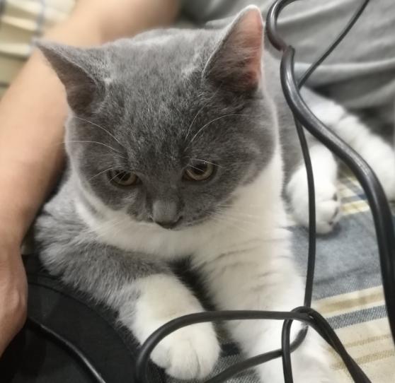 最近荣登铲屎官,请教猫咪护理指南!硚口这片有什么靠谱的宠物店推荐?