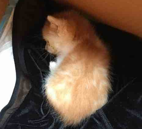 今天在路边捡到被遗弃的小奶猫,求好心人收养!地址在汉口江汉路附近!