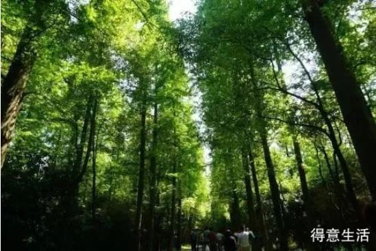 """喜訊!湖北4個""""國字號""""森林公園規劃獲批!未來將這樣建……"""