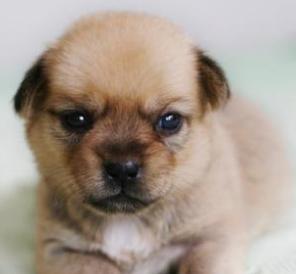 流浪狗被小区的人拿棍打了 ,真是难过!它还只是一个狗宝宝!