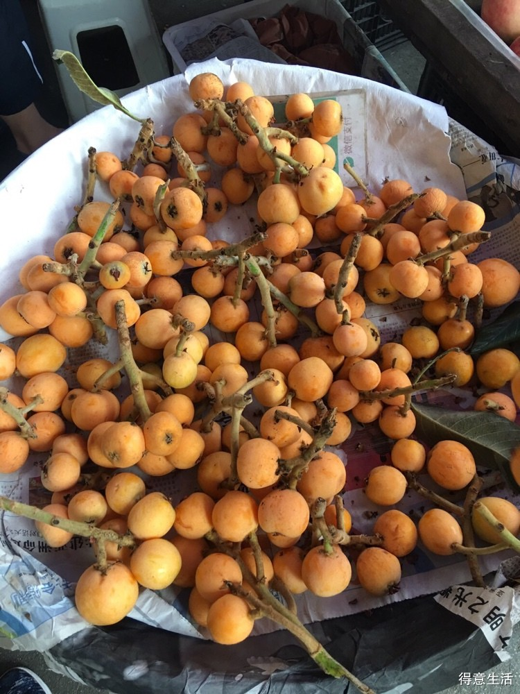 苹果都卖十几块了,枇杷十五一斤也就不觉得贵了?现在的水果你们吃得起吗?
