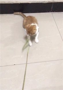 求助!领养了一只5个月大的橘猫,可最近一天只吃20颗猫粮,怎么办?