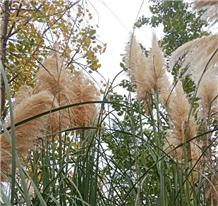 升級版戶部巷?還不如去江灘溜達看看絕美江景,又到了拍蘆葦的季節啦!