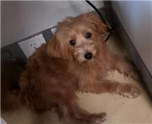 早上坐电梯跟着同事上来办公室的狗狗,麻烦大家看一下是不是自家走丢的?