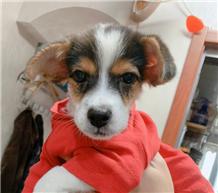 通过一个月的治疗终于痊愈,2个半月的狗狗找爱心人士领养啦!