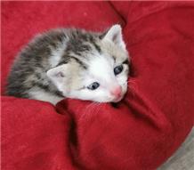 在小区楼下捡了一只幼猫,精力不够不能好好照顾它,爱猫人士赶紧来领养啦!
