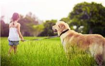 为什么很多人养宠物狗,却不知道应当怎么样给狗狗打理它的毛发?
