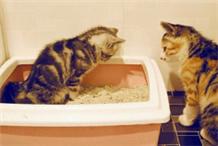 豆腐猫砂测评!那些当红豆腐砂不得不说的坑,你踩过哪些?
