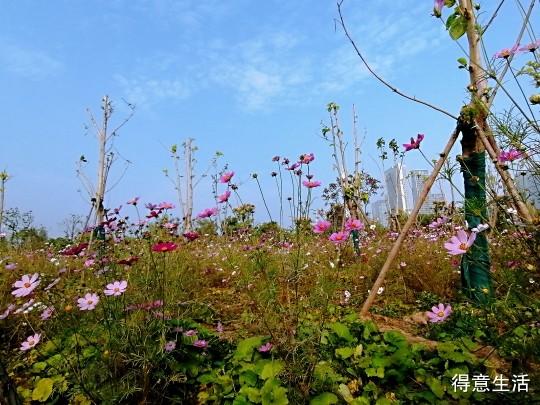 当秋风扫起落叶, 当夏花不再芬芳,武汉的秋天美得静悄悄!