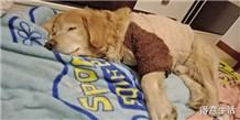 狗狗身上有硬块怎么办,哪里有经验很丰富的宠物医生?
