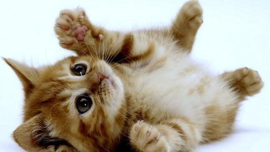 猫咪怀孕后,该怎么处理?喂食和接触,都不能马虎!