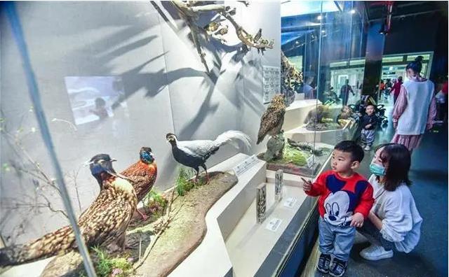 过早冒|园博园自然博物馆重开成热门打卡地!中小学5G+VR虚拟教学实验开课!
