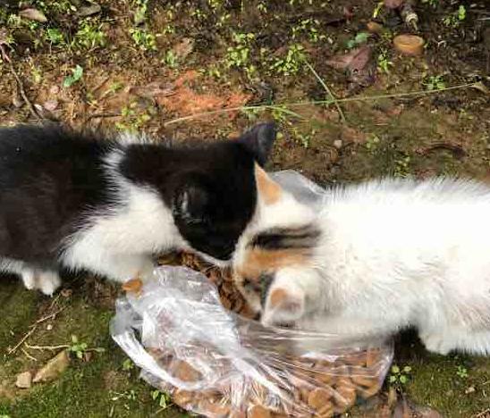 小区里的两只小猫,很亲人,两小只相依为命,想给它们找一个家!