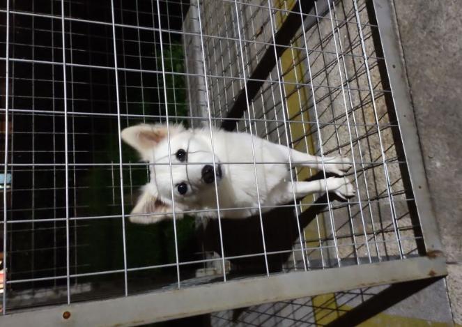 长港路附近小区有一只走失的宠物狗,望失主见到
