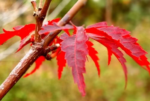 分享诗意生活:手机拍摄——绿道红叶
