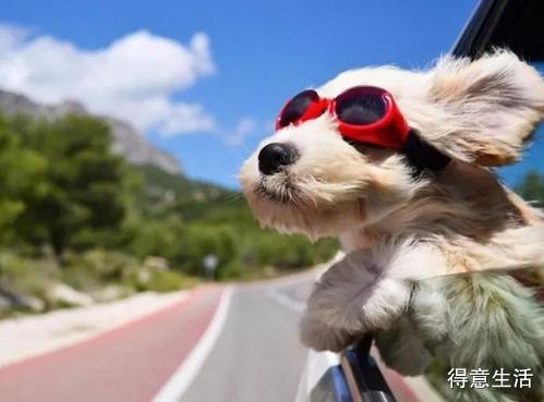 【集合啦】得意房产首届汪星人森友会来了!火速领取属于狗狗的圣诞轰趴邀请卡吧 !
