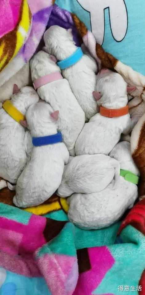 熊宝宝的第一胎,好惊喜呀,居然一下子生了8只!