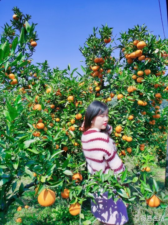 发现周末遛娃好去处,阳光下的橘子园好美!