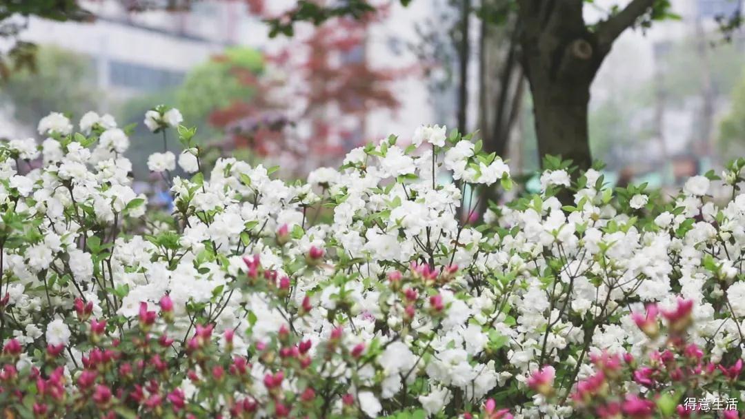 园艺沙龙春风暖暖,幸会杜鹃盛放!