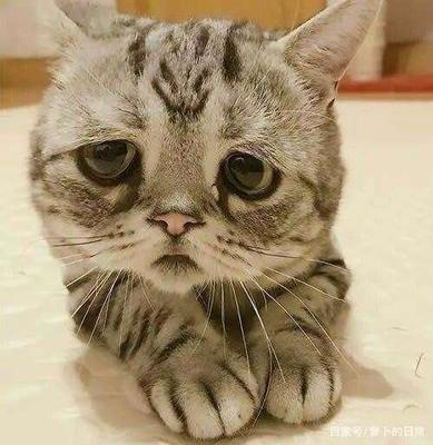 猫咪呕吐的原因有哪些?建议先收藏学习一下!