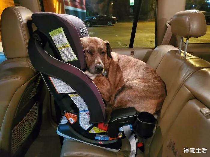大夫求你看看我的狗吧,它好像哪里坏了!