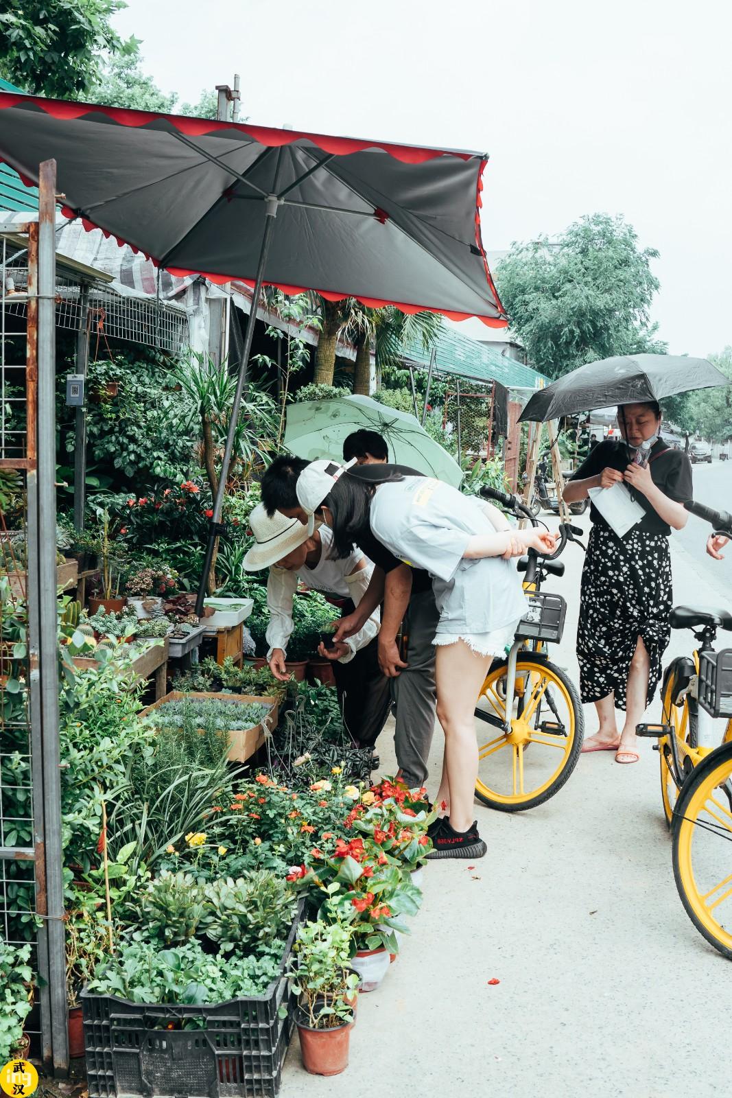 私藏市中心宝藏花海,3块5块带走整个夏天!