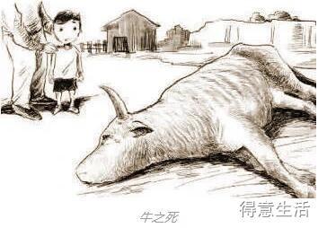 你知道牛是怎么死的吗,这两点一定要看!