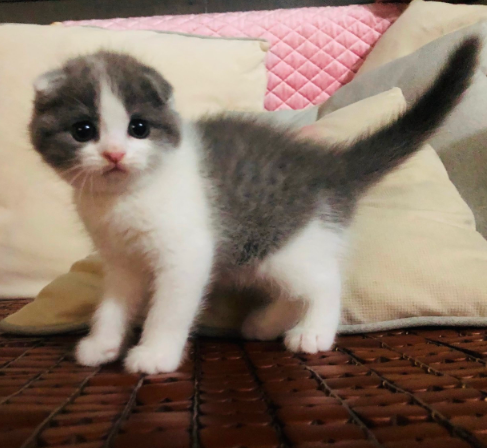 科学的角度分析猫咪为什么喜欢猫薄荷!