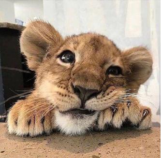 有的小动物跟人一起生活久了,就不拿自己当小动物了!