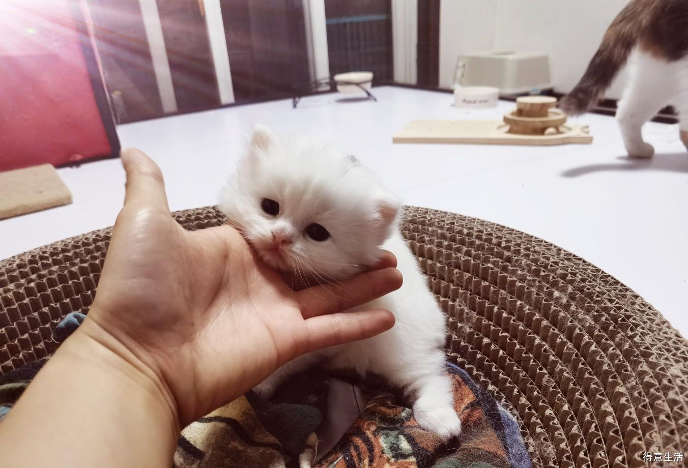 猫界李荣浩,这可爱的样子你见过吗?