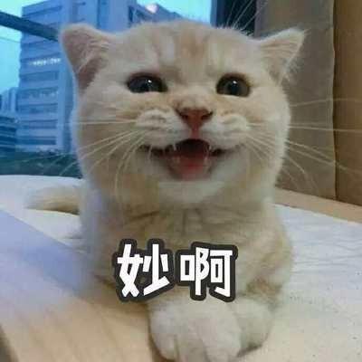 新手养猫指南,看看你家的猫有没有上榜!