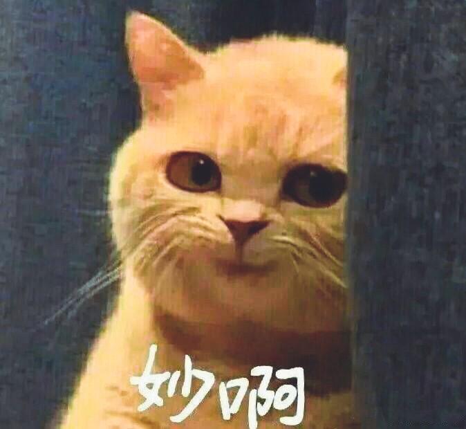 动物们换上猫脸,只能感叹毫无违和感!