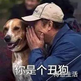 好看的狗狗多数雷同,但长得丑的狗子,各有特色?