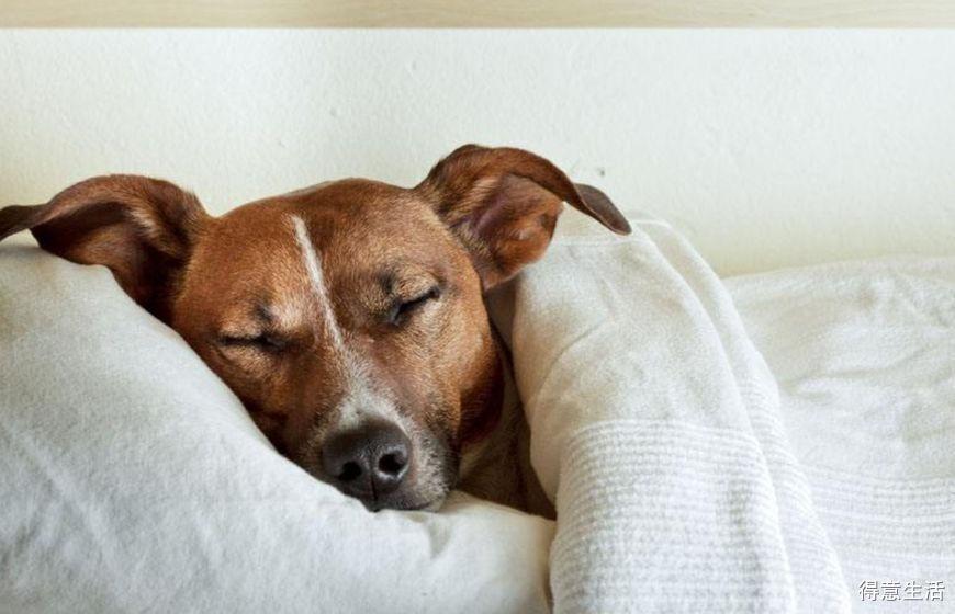 讨论:你会让你家的猫或狗睡床上吗?