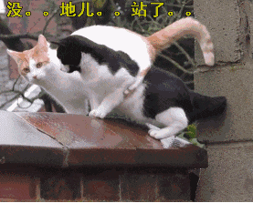据说,猫咪在跳之前都有精确计算?