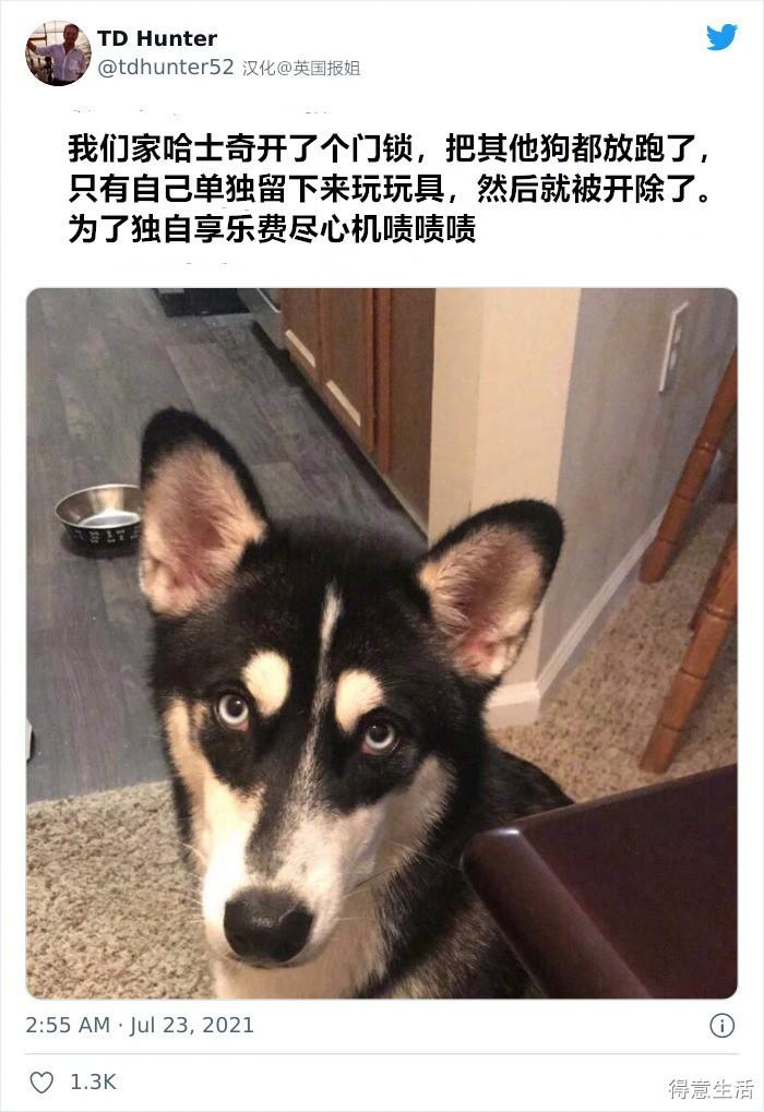 自家狗子被日托班开除的奇怪理由,个个都是聪明善良的小可爱 !